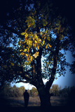 Man and the Tree Photographic Print by Svetlana Sewell