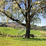 Countryside Photographic Print by Wolfgang Simlinger
