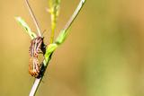 Beetle Photographic Print by Katarzyna Kuban