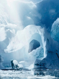 Polar Bear and Iceberg Photographic Print by Svetlana Sewell
