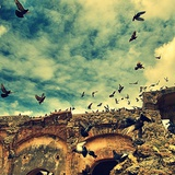 Flock of Birds Photographic Print by Ronaldo Pichardo