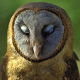 Owl Photographic Print by Ronaldo Pichardo