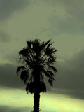 Palm Tree Photographic Print by Gary Waters