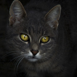 Portrait of a Cat Photographic Print by Eugenia Kyriakopoulou