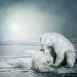 Polarbears Photographic Print by Daniela Owergoor