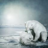 Polarbears Photographic Print by Daniela Owergoor