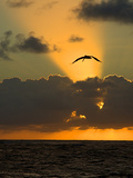 Seabird Photographic Print by Ronaldo Pichardo