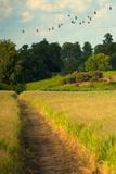 Summer Field Photographic Print by Svetlana Sewell