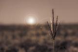 Sunset Photographic Print by Katarzyna Kuban