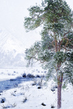 Winter Landscape 6 Photographic Print by Svetlana Sewell