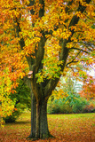 Autumn Tree in the Park Photographic Print by Katarzyna Kuban