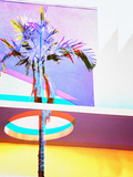 Holey Palm Tree, Miami Beach Photographic Print by Dolores Smart