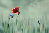 Sumer Flowers Photographic Print by Christine Ellger