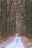 Walk in the Wood Photographic Print by Katarzyna Kuban