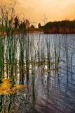 Summer Landscape 4 Photographic Print by Svetlana Sewell