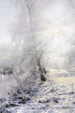 Winter Landscape 1 Photographic Print by Svetlana Sewell