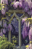 Window with Lilacs 1 Photographic Print by Svetlana Sewell
