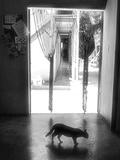 Solitude Photographic Print by Ronaldo Pichardo