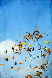 Yellow Leaves 2 Photographic Print by Svetlana Sewell