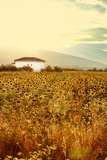 Sunflowers and House Photographic Print by Eugenia Kyriakopoulou