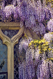 Window with Lilacs 2 Photographic Print by Svetlana Sewell