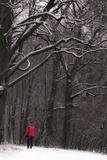 Winter Photographic Print by Katarzyna Kuban