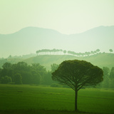 Waltz of the Trees, Tuscany Photographic Print by Dolores Smart