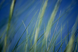 Rustling Grass Photographic Print by Ursula Kuprat