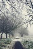 Winter Photographic Print by Svetlana Sewell