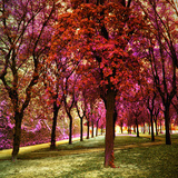 Red Trees, Siena, Italy Photographic Print by Dolores Smart