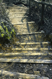 Stairs 4 Photographic Print by Svetlana Sewell