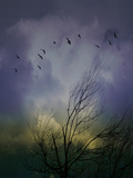 Migrating Crows Photographic Print by Sonja Losberg