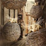 The Forgotten Flying Pig Invasion Fotografie-Druck von Kinga Britschgi