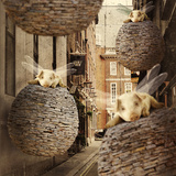 The Forgotten Flying Pig Invasion Photographic Print by Kinga Britschgi