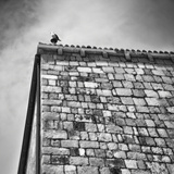 Pigeon on the Roof Photographic Print by Eugenia Kyriakopoulou