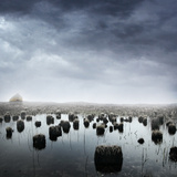 Wetlands Photographic Print by Daniela Owergoor
