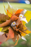 Uquet from Autumn Leaves Photographic Print by Katarzyna Kuban