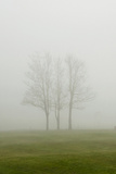Misty Landscape 2 Photographic Print by Svetlana Sewell