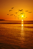 Sunset and Birds Photographic Print by Svetlana Sewell