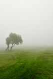 Misty Landscape 3 Photographic Print by Svetlana Sewell
