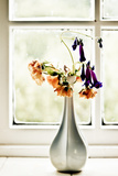 Vase with Orange and VIolet Flowers Photographic Print by Phil Payne