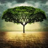 Savanna Tree Photographic Print by Daniela Owergoor