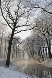 Winter3 Photographic Print by Wolfgang Simlinger