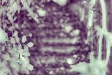 Stairs Photographic Print by Katarzyna Kuban
