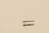 The Floating Boat Photographic Print by Katarzyna Kuban