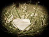 Petals in the Grass Photographic Print by Max Hertlischka