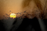 Sunset on Meadow Photographic Print by Ronaldo Pichardo