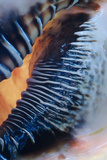 Tungesten Shell Photographic Print by Linda Mann