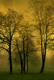 Trees 2 Photographic Print by Svetlana Sewell