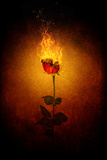 Rose in Flames Photographic Print by Daniela Owergoor